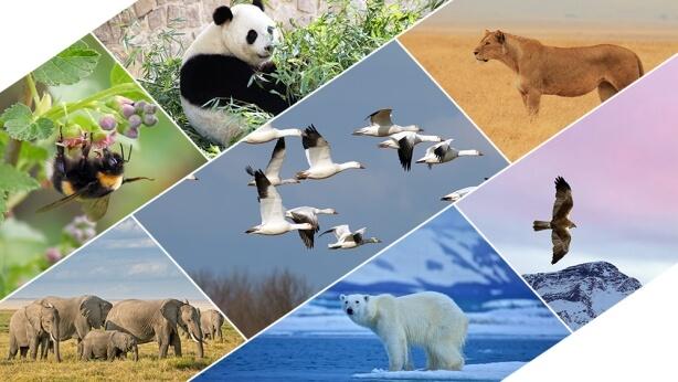 رسم الله أيضًا حدودًا للطيور والوحوش والأسماك والحشرات المُتنوِّعة ولجميع النباتات.